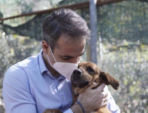Κυριάκος Μητσοτάκης: Υιοθέτησε σκυλάκι από καταφύγιο που επισκέφθηκε – Δείτε τον υπέροχο «Πίνατ»